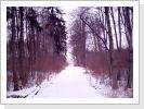 Bolheimer idyllische Waldwege